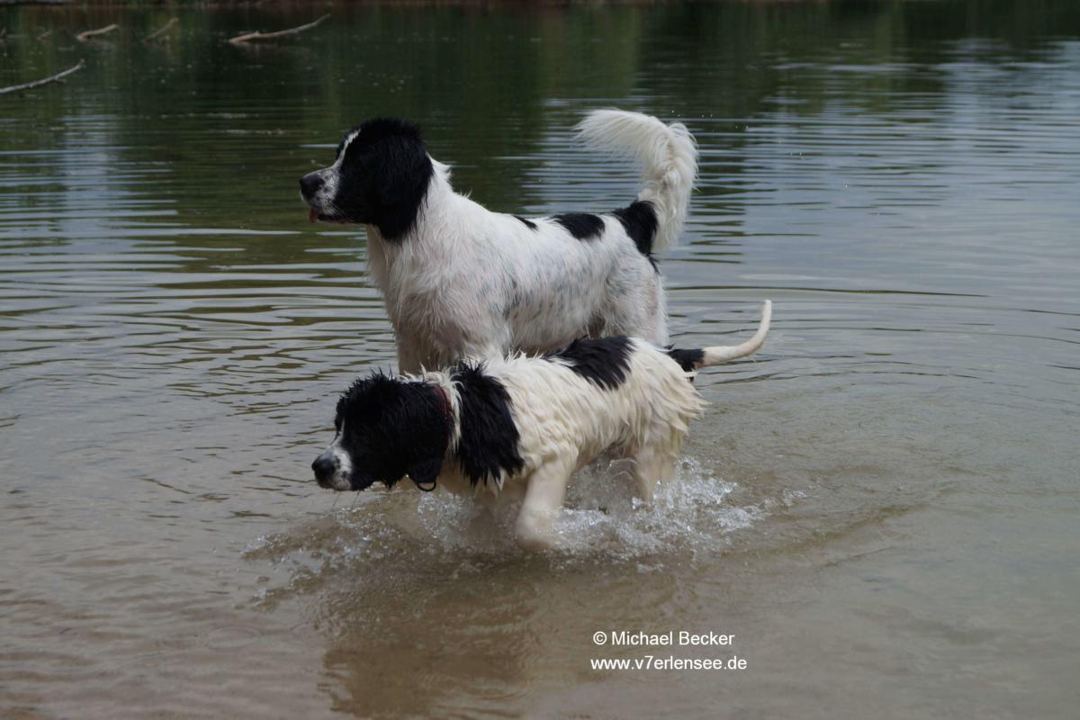 Chelsea im Wasser